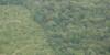 COMMUNIQUE DE PRESSE REDD+ : Lutte contre la déforestation