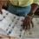 Législatives 2021 : la CEI décide de retirer un candidat de la liste définitive à Akoupé-Becouefin (Communiqué)